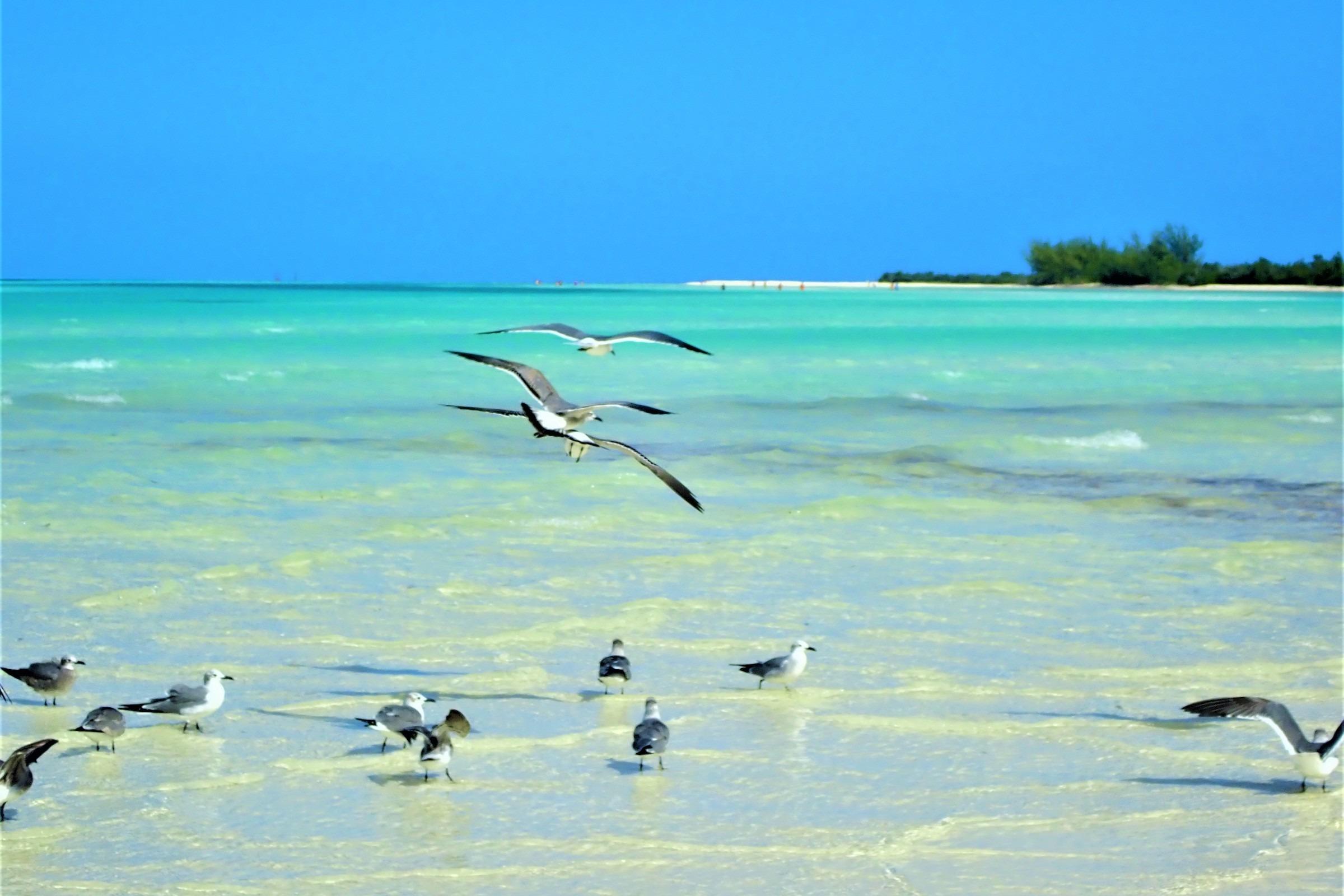 Cuba - A photo by Anastasia Amor