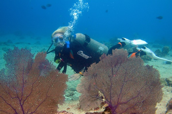 Dead Delicious Adie Sturm Mystery - A dive and a nasty death in the depths. My own Scuba experience sparked the idea